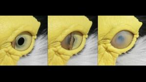 original-eye